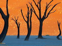 Deadvlei - Namibi