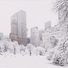 Winter Wonderland, Central Park, New York City. Photo by Gabriel Flores. pic.twitter.com/foOyIOH6gL