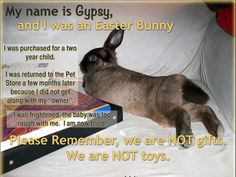 This rabbit was an Easter bunny for a two year old child. The child was too rough and now the bunny is blind. Please remember, rabbits are not gifts or toys. Rabbits require a long term commitment and are not good pets for children. Bunny Rescue, Baby Animals, Cute Animals, Small Animals, Funny Animals, Pet Rabbit, Giant Rabbit, Two Year Olds, Animal Quotes