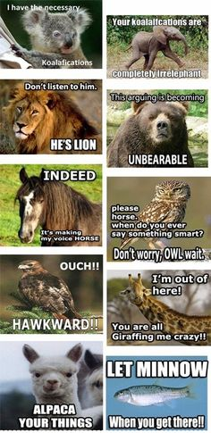 All Of The Animals! One Stop Humour  CLICK THIS PIN if you want to learn how you can EARN MONEY while surfing on Pinterest