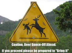 Deer dance off - should not have laughed as much as I did..