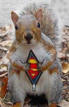 My dog Lucy, her arch nemesis... Super Squirrel!
