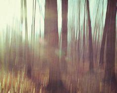 sunlight and trees- Irene Suchocki phtography