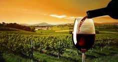 CHIANTI LANDSCAPES & FLAVORS (departure from Florence): Full day tour in the #Chianti region with 2 wine tastings. Discover details: http://www.sunnytuscanytours.com/gestione/view.php3?DB1_lingua=ENG&DB1_codice=1502&pagout=scheda_ENG.html&DB2_tag=Daily%20Tours