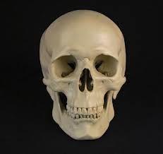 Skull Anatomy, Head Anatomy, Anatomy Drawing, Manga Drawing, Figure Drawing, Skull Reference, Anatomy Reference, Photo Reference, Drawing Reference