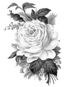 www.freeprettythingsforyou.com wp-content uploads 2014 07 free-vintage-rose-transfer-FPTFY-black-and-white.jpg