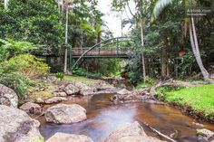 While staying at Tall Trees Motel take a walk around their creek and gardens at Curtis Falls http://ticketsandtours.com.au/accomodation/