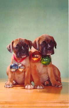 Boxer Dogs Photographic Print: Boxer Puppies with Christmas Bulb Collars by Found Image Press : - Christmas Boxers, Christmas Dog, Christmas Christmas, Vintage Christmas, Boxer And Baby, Boxer Love, Boxer Puppies, Dogs And Puppies, I Love Dogs