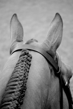 If I could get my horses braids in that beautifully for our shows... I would be a very, very happy girl.