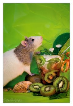 Mani 6 - Fancy rat by DianePhotos