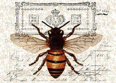 .Queen bee.