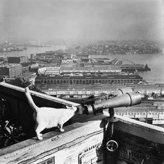 Sydney Harbour Bridge's famous cattery