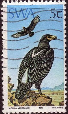 South West Africa 1975 Bird Eagle Fine Used SG 271 Scott 374 Other African and British Commonwealth Stamps HERE!