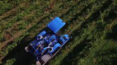 Vendange filmé par un drone dans un domaine viticole
