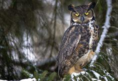owl - Athenas pet - Named minerva