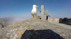 Möwe klaut meine GoPro und filmt die Aussicht von der Insel Cíes...