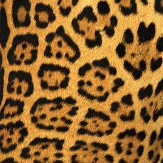jaguar, cheetah, panther and leopard are same or different? Jaguar Spots, New Photo Frame, Cat Tattoo, Owl Tattoos, Tatoos, Aztec Warrior, Samsung Galaxy Mini, Crop Image, Color Balance