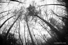 """""""Trees silhouetted against a cloudy sky at Bent Creek Experimental Forest near Asheville, North Carolina. @camiphoto  #silhouette #sky #asheville #bentcreek #nc"""