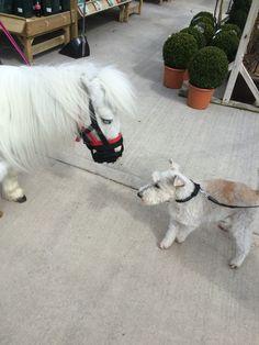 Eric meeting a new friend