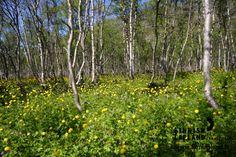 Kilpisjärvi, Enontekiö. photo: Antti Pietikäinen #filmlapland #arcticshooting #finlandlapland