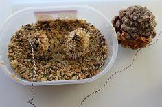DIY: des mangeoires pommes de pin pour les oiseaux