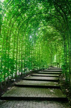 緑のトンネル緑のトンネル ぱたくそ