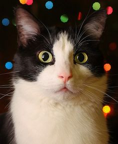 ♥ surprised cat with lights in background