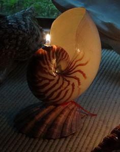 Wish Lamps   Indiegogo