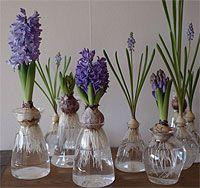nichi : nichi * hyacinths Dream Garden, Home And Garden, Green Rose, Container Gardening, Terrarium, Planting Flowers, Floral Arrangements, Our Wedding, Glass Vase
