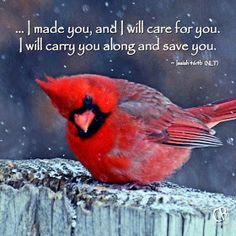 Isaiah thank you dad I did ask you for a picture of a cardinal today so I know your with me. Thank you love you DAD. Funny Bird, Images Bible, Isaiah 46, Psalm 46, Faith In God, Bible Scriptures, Scripture Quotes, Scripture Pictures, Healing Scriptures