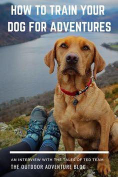 10 Best Puppy Dog Potty Pads… #dogtrainingcourse Training Your Puppy, Dog Training Tips, Brain Training, Potty Training, Leash Training, Training School, Training Exercises, Toilet Training, Training Collar