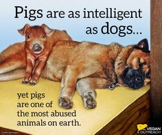 ... pigs are one of the most abused animals on earth #vegan #truth