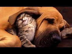 Коты и собаки делят лежанку)