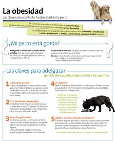 La #obesidad en perros. Claves para controlarla.