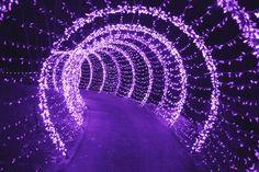light, purple, and tumblr image