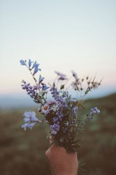 que lindo amor de flores silvestres - Wild Flowers, Beautiful Flowers, Purple Flowers, Imagen Natural, Flower Aesthetic, Flower Wallpaper, Aesthetic Pictures, Pretty Pictures, Pretty Pics
