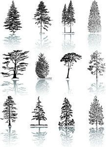Tree Silhouettes – Stock Illustration # 1947548 - All About Pine Tattoo, Forest Tattoos, Nature Tattoos, Realistic Drawings, Art Drawings, Landscape Drawings, Types Of Pine Trees, Conifer Trees, Tree Sketches