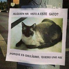 miaucoles_alguien_ha_visto_a_este_gato_porque_es_chulisimo_610