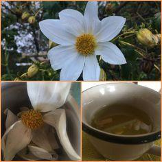 Backtoeden: Infusión de flores de Dalia (Dahlia) Plants, Make Envelopes, Flowers, Plant, Planets