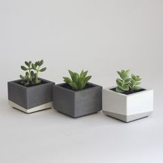 Monochrome set of concrete planters. Mini size for small succulents. Perfect for the office!