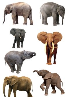 Elephants PNG 1 by Anavrin2010.deviantart.com