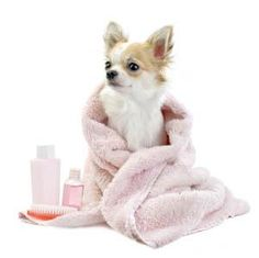 31 best precious pets images on pinterest animal babies fluffy dog grooming of winder is a well known pet washing and grooming company in the winder ga area reach our professional team at now solutioingenieria Images