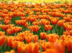 arancio :)