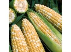 Global Corn Seeds Market Research Report 2017