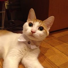ERI. (n) collar. - [ Learn Japanese Words with Pinterest by webjapanese.com ]