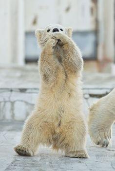 Oppan Gangnam Style / Photo by Uni_Zoo