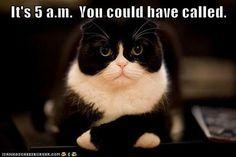 This so my cat!
