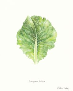 Kristen Johns: Lettuce has been growing for thousands of years......