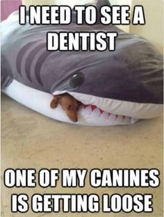 Funny Memes Dog Memes That Are Too Freaking Hilarious (46+ Pictures)