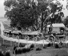 When traction engines ruled the roads - Number 8 Network